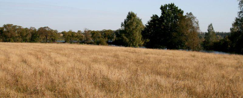 Можно ли продать землю сельхозназначения государству