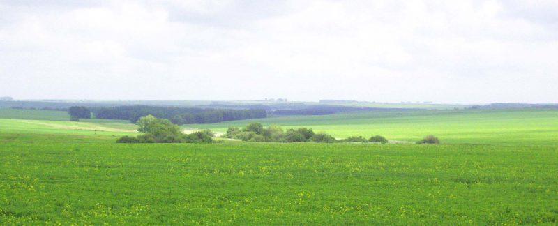 Как оформить акт о согласовании границ земельного участка?