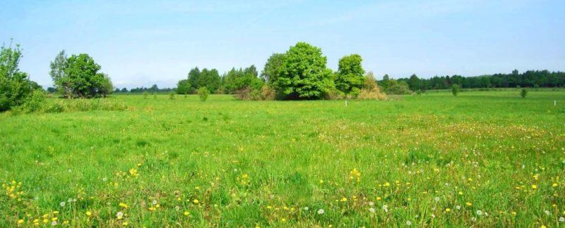 Изображение - Рекомендации по быстрой продаже земельного участка 03137082-800x324
